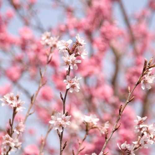 もう春だしおすすめのアンドロイドアプリを紹介するよ!
